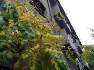 shades-of-yellow-Bucharest_9875